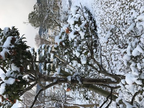 福岡も大雪に見舞われて・・・